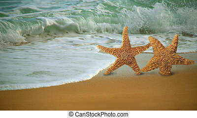 Adorable Star Fish Walking Along the Beach in the Surf