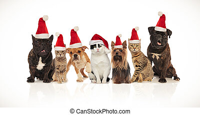 adorable team of seven christmas pets of different breeds sitting and standing on white background while panting