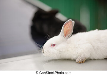 Adorable two bunnies
