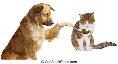 adorable, veterinario, perro