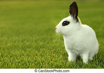 White Bunny Rabbit Outdoors in Grass - Adorable White Bunny...