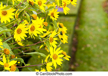 Adorable yellow flowers in a meadow