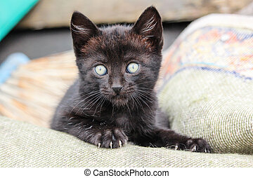 Adorable young black cat with eyes wide open and little paw with claws out.
