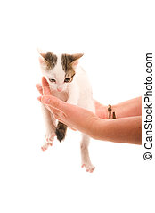 Adorable young cat in woman's hand