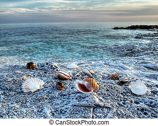 Adriatic sea 2 - Adriatic shells on rocky Adriatic coast