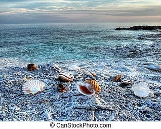 Adriatic shells on rocky Adriatic coast