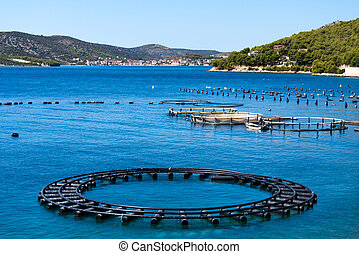 Adriatic Sea Business