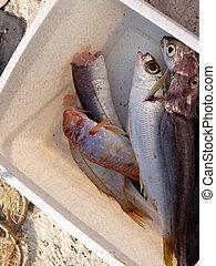 Adriatic sea fish