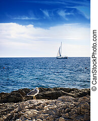 Adriatic staff - Sailboat and gull on the high seas, usual ...