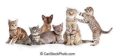 adskillige, katte, gruppe, isoleret