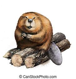 Adult Beaver sitting on logs. - Beaver sitting logs....