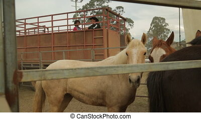 Adult horses on a ranch and a big truck - A still wide shot...