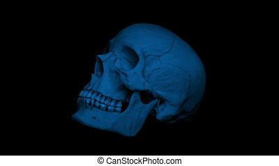 Adult Human Skull Rotating In The Dark Loop