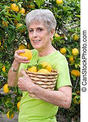 Adult picking lemons from tree