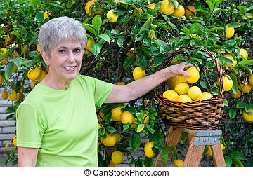 Adult picking lemons