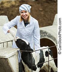 Adult vet taking care of newborn calf in livestock farm.
