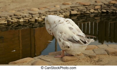 Adult white goose - Decorative white goose