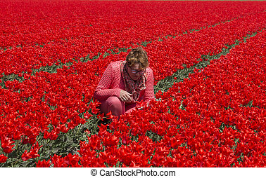 adult woman in red tulip field