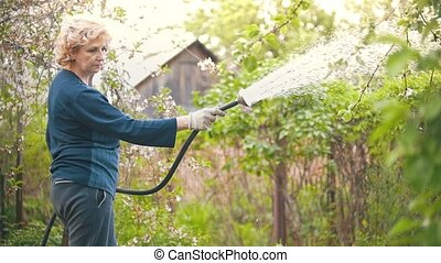 Adult woman water an Apple tree from a hose, summer day in the garden