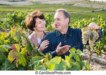 adulto, exposiciones, uvas, fabricante, esposa, vino