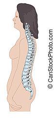 adulto, hembra, espina dorsal