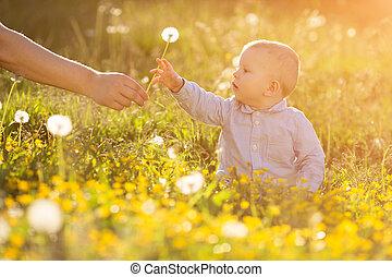 adulto, mano, asideros, bebé, diente de león, en, ocaso, niño, sentado, en, un, pradera, en el sol, el, niño, en, el, pradera, concepto, en, el, tema, de, niño, protección, alérgico, a, polen, de, flores, alergia, backlit, luz sol, otoño, brillo, sol, sol, aprendizaje, nuevo, educación