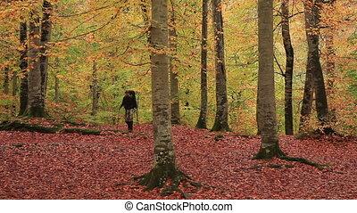 adventurer in the forest