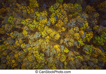 Aerial above view of autumn forest