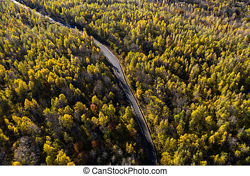Aerial above view of autumn forest winding road