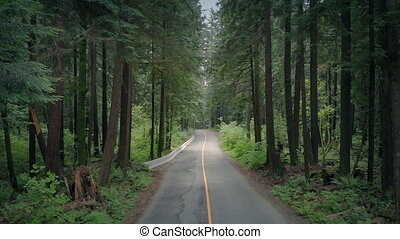 Aerial Along Scenic Forest Road - Aerial shot traveling...