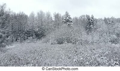 Aerial camera of winter landscape trees in snow camera at...