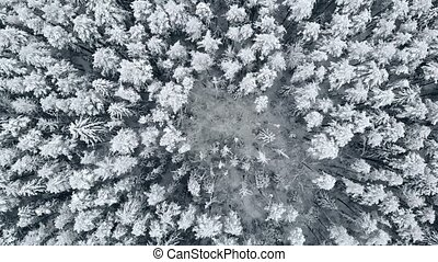 Aerial camera takes off up over winter snowy forest in...