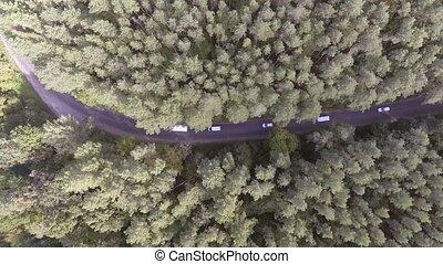 AERIAL: Car driving through pine forest. - AERIAL: Car...
