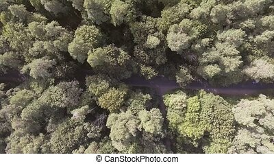 AERIAL: Car driving through pine forest. - AERIAL: Car...