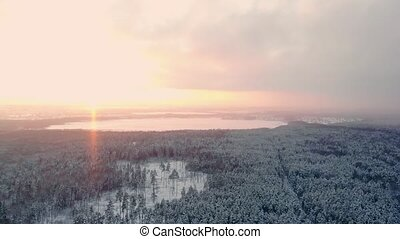 AERIAL CLOSE UP Flying over frozen treetops in snowy mixed forest at misty sunrise. Golden sun rising behind icy mixed forest wrapped in morning fog and snow in cold winter. Stunning winter landscape