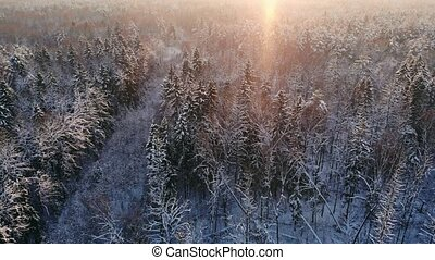 AERIAL CLOSE UP Flying over frozen treetops in snowy mixed...