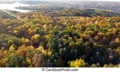 Aerial close-up view of the forest with trees covered with...