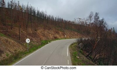 Aerial. Condition of forests and trees after fires in...
