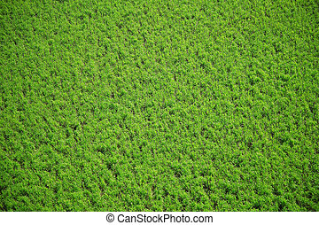 Aerial crops - Vivid green grass from far above - abstract ...