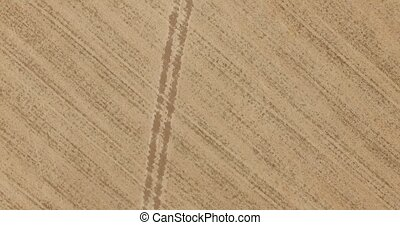 Aerial. Drone Flight Over Field of Corn