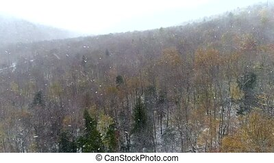 Aerial Drone - Fly Over Bare Forest in Driving Snow 4K.