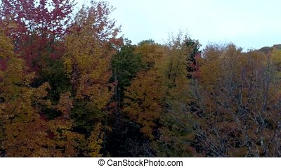 Aerial Drone - Fly Over Bare Trees Towards Full Color Trees in Fall in Vermont.