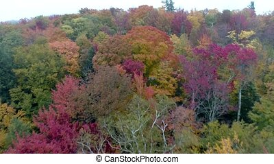 Aerial Drone - Fly Over Canopy of Trees in Full Color in...