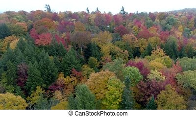 Aerial Drone - Fly Slowly Over Canopy of Trees in Full Color in Fall in Vermont.