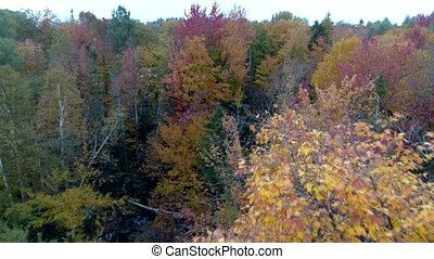 Aerial Drone - Fly Through Trees in Full Color While Others Are Bare in Fall in Vermont.