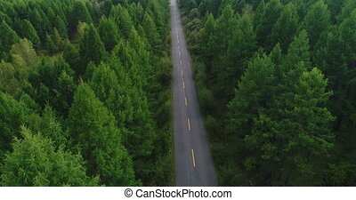 Aerial Drone Footage View: Rising up from trail through...