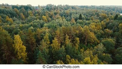 Aerial drone horizontal view of forest and coniferous trees in the north. Russian landscape with pines and fir, sunny day in wild nature. Concept for traveling tourists