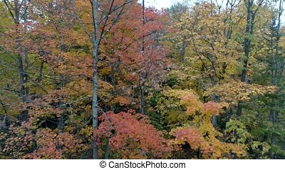 Aerial Drone - Pan Across Forest With Trees in Full Color and Others Bare in Fall in Vermont.