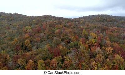 Aerial Drone - Scan Hillside Filled With Fall Color Trees in...