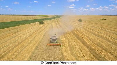 Aerial drone shot of a combine harvester working in a wheat field